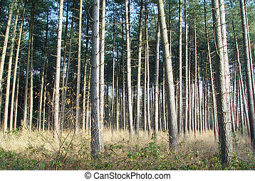 Row of trees - Forest with lots of trees, nice lines