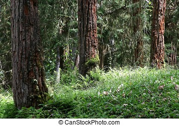 Tropical Forest - Tropical Forrest at Cameron Highland,...