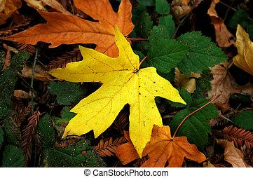 Fall Leaf - A fall leaf in a Japanese Garden