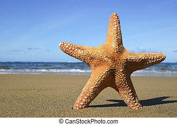 Beach Starfish - Starfish on the Beach