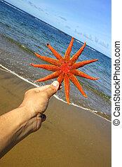 Hand and Starfish