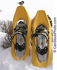 Bird - snow shoes - Bird on snow shoes
