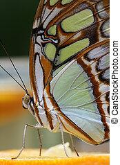 butterfly 5 - butterfly sitting on an orange 2