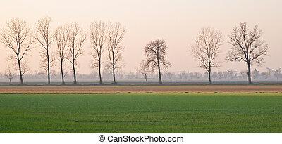 Poplar trees in a winter agrarian landscape near Gossolengo,...