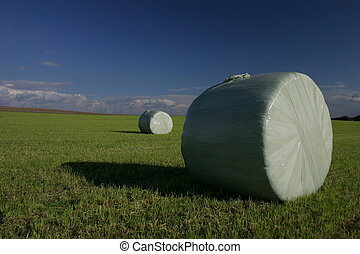 Hay bundles - Hay bundle after the harvest on a field in...