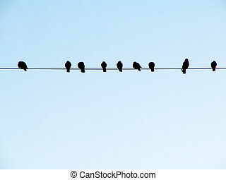 Birds on a Wire - Pigeons Watching the Sunrise