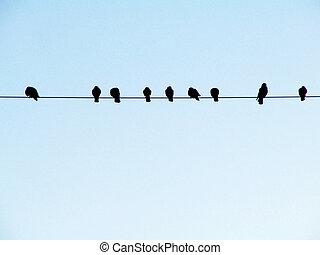 Pássaros, fio