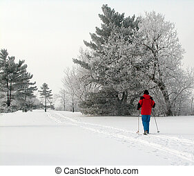 Cross Country Skiing - Woman in red jacket cross country...