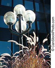 Lamp and grasses - Street lamps and purple fountain grass...