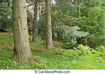 lush wood - Pine tree in a lush underbrush wood, botanical...