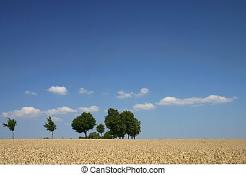 Summer landscape with cornfield and trees