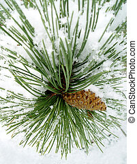 Snowy pine branch - Snow-covered pinecone