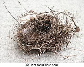 Bird Nest - Empty bird nest.
