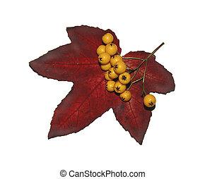 Autumn Leaf and Berries - Berries and an autumn leaf, on a...