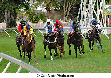 Race Day - Horse racing in Bridgetown, Barbados