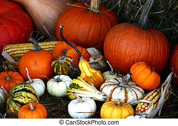 Colorful Gourds - Basket full of colors and shapes