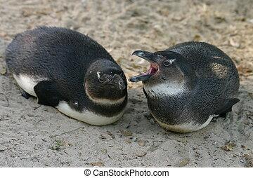 dos, joven, Pingüinos