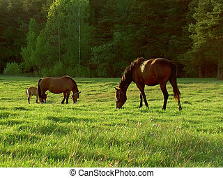 horses in morning light