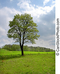 spring tree - lonely spring tree