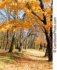 Forest path 1 - Path in the autumn park