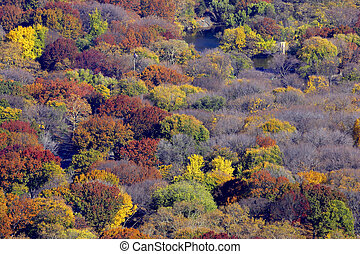 Tops of trees in central park from the roof of the...