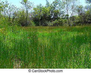 Swamp at day - A healthy temporary swamp at during daytime