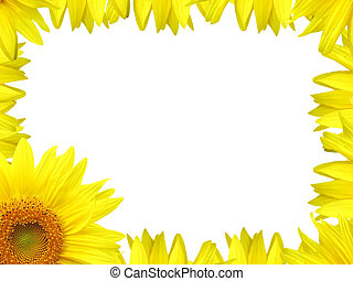 Flower border - Sunflower Border