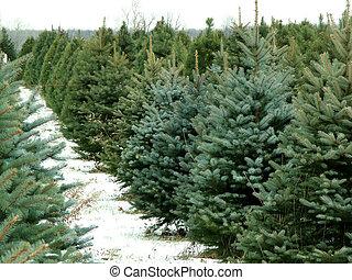 Christmas tree farm with snow