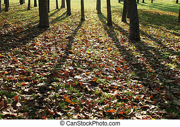 shadows of trees and autumn leaves