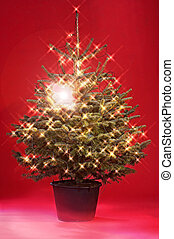 Christmas Tree - Weihnachtsbaum - Christmas tree with fairy...