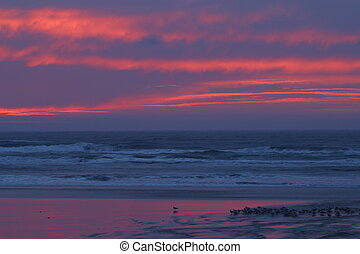 Pink Sky Sunset - Pink sky sunset with birds gathered on the...