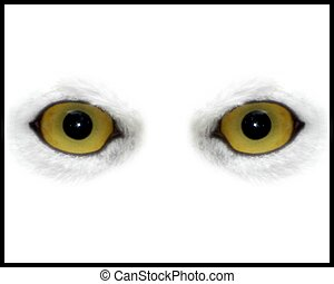 Owl Eyes - Owl eyes on White background
