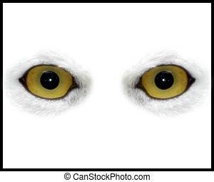 Owl Eyes - Owl eyes on White background