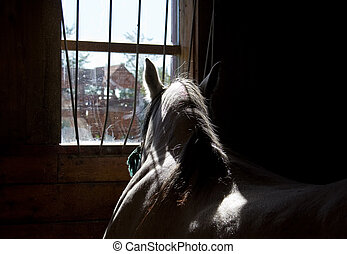 Horse in a stable - Horse looking through a window in a...