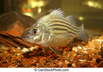 Fish Tank - Close up of fish in tank. Focus on front of...