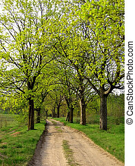 spring road - spring, country road