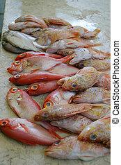 Really Fresh Fish - Fresh fish on display at a fish market