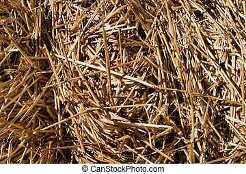 Hay - Closeup of a hay; makes a nice textured background