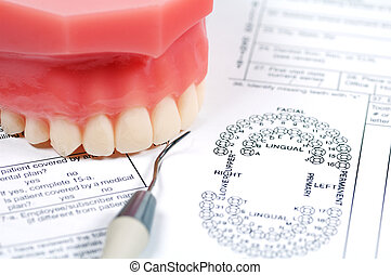 Dental Form and Model of Upper Teeth