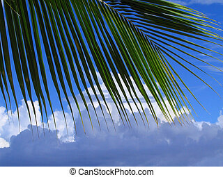Palm tree leaf and cloudscape - Palm tree leaf silhouette in...