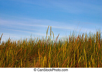 high grass and sky