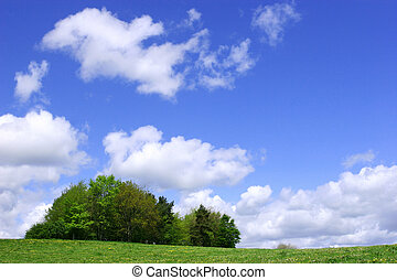A Clump of Trees - Trees in a field full of wildflowers in...