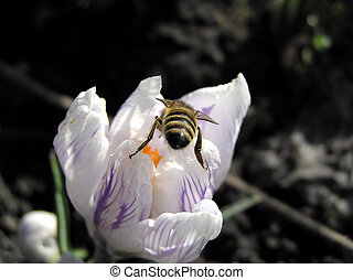 Spring and bee