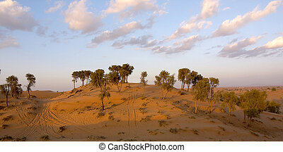 Desert Scene - Evening shot over the desert in United Arab...