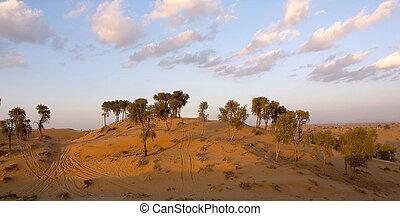 Desert Scene - Evening shot over the desert in United Arab...