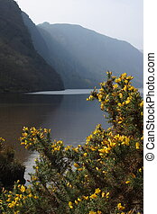 Upper Lake at Wicklow Mountains National Park