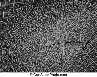 Abstract Pattern - -- Is it a city map, a satellite photo, a...