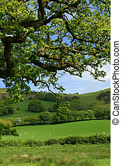 Springtime Meadows - Overhead branches of an oak tree in...