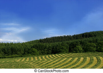 Lines and Curves of Hay