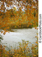 Golden Autumn - Golden leaves frame the Arkansas River from...